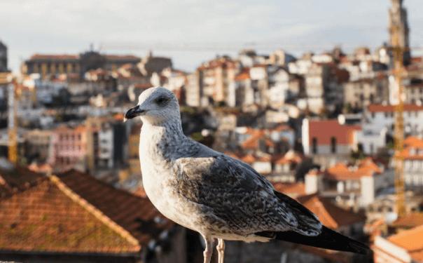 葡萄牙35万基金项目政策,为什么选择葡萄牙基金移民?